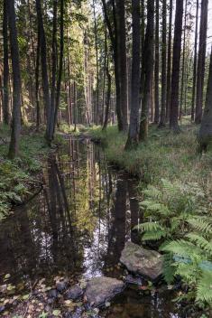 Neslívský potok