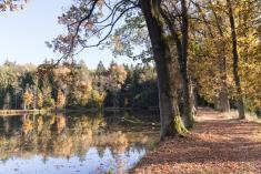 Hráz Neslívského rybníka